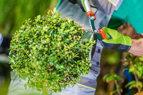 Tuinaanlegger-groenbeheerder Tectura